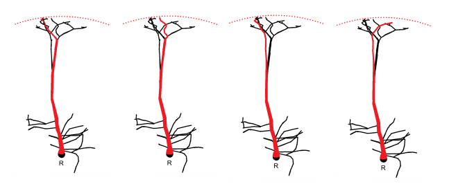 Fig.2 Notes on Topology for Neural Morphologies Paper