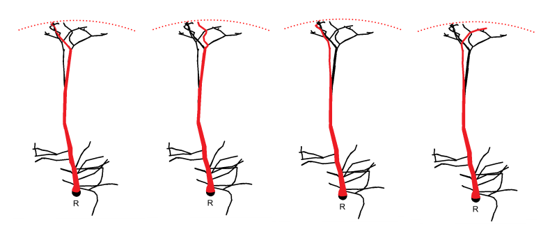 Notes on: A Topological Representation of Branching Neuronal Morphologies, Kanari et al.2017