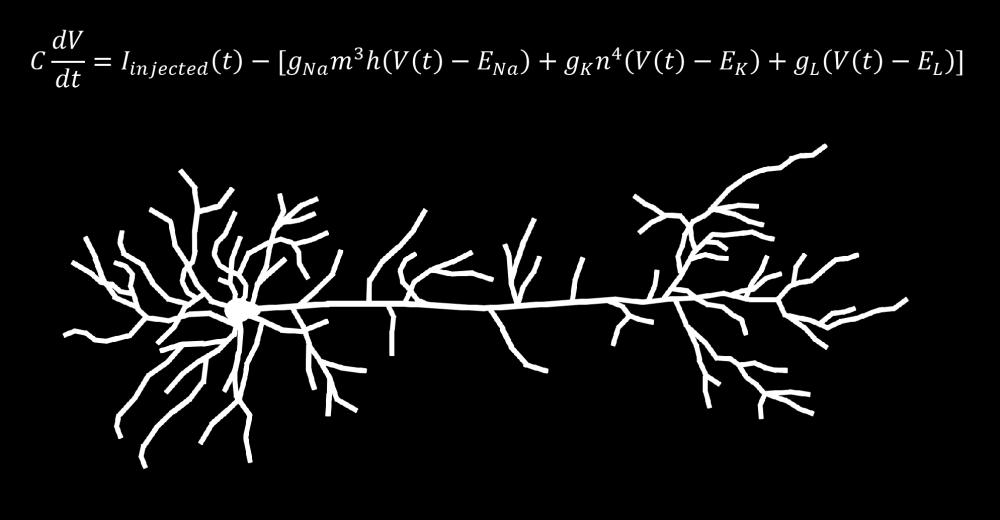 Hodkin-Huxley and Pyramidal Neuron Image.png