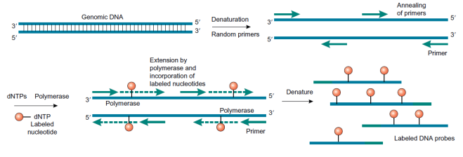 BioconjugatesFig1