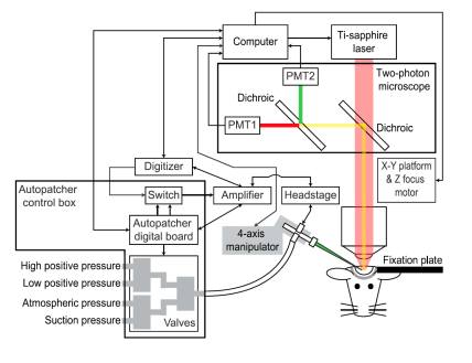 Automated Patch Clamp System