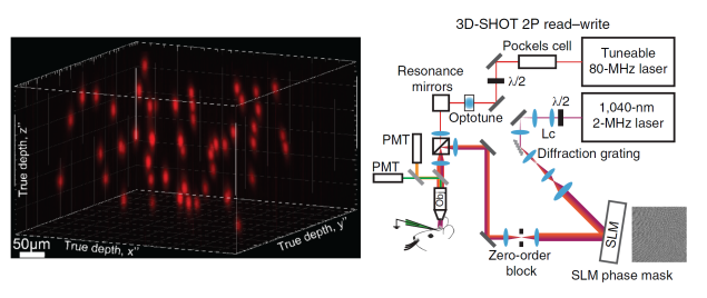Optogenetic control of fifty neurons