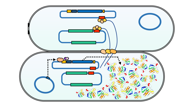 Design of a De Novo Aggregating Antimicrobial Peptide and a Bacterial Conjugation-Based Delivery System (journalarticle)