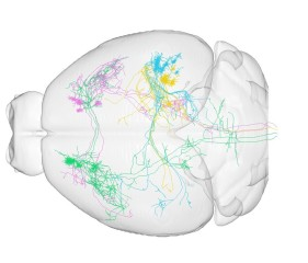 china brain mapping image