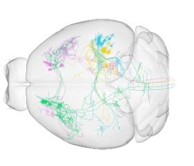 china brain mapping image