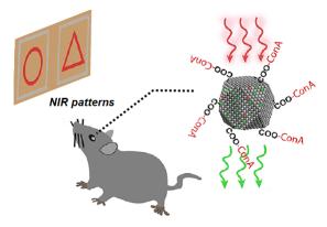 NIR vision using upconversion nanoparticles