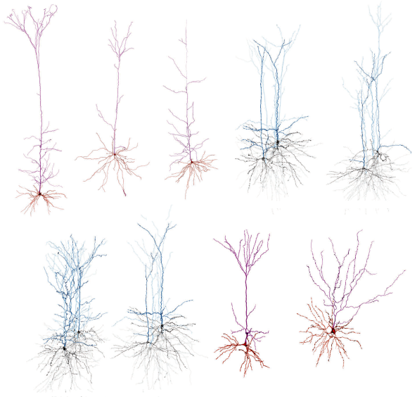 Topological data analysis to classify neurons